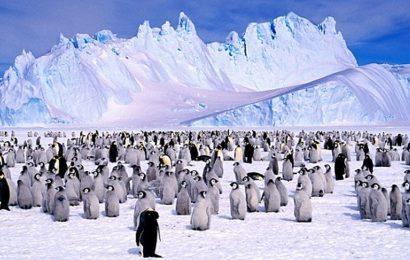 大陸拓展極地旅遊 開放赴南極長城站申請
